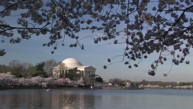 ws, tidal basin and jefferson memorial in distance, cherry blossom in foreground, washington dc, washington, usa - 新古典派点の映像素材/bロール