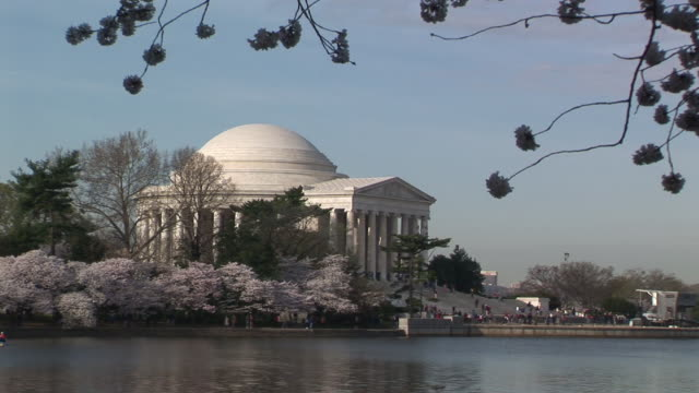 zo, ws, tidal basin and jefferson memorial in distance, cherry blossom in foreground, washington dc, washington, usa - jefferson memorial stock videos & royalty-free footage