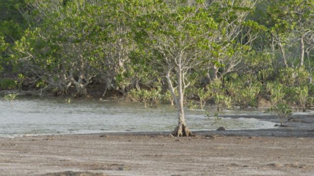 tide comes in amongst mangrove trees, darwin, australia - tide stock videos & royalty-free footage