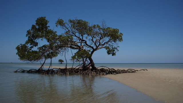 tl tide comes in around mangrove trees, australia - coastal feature stock videos & royalty-free footage