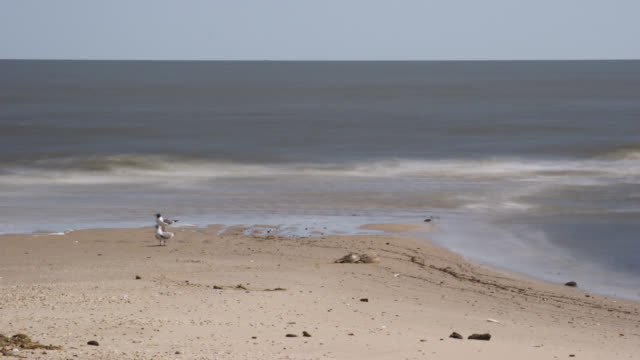 tl tide goes out on shallow beach revealing spit, delaware - tide out stock videos & royalty-free footage