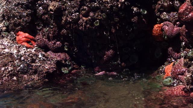 stockvideo's en b-roll-footage met tide pool - rankpootkreeft