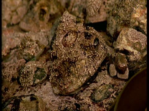 vídeos de stock, filmes e b-roll de a tide rises over a barnacle-encrusted limpet shell. - gastrópode