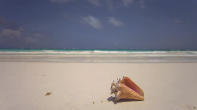 stockvideo's en b-roll-footage met sm ws tide rolling in on shore with conch shell in foreground/ tulum, mexico - schild lichaamsdeel van dieren