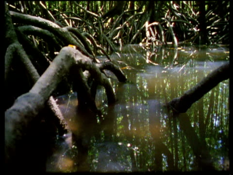 tide rushes in and submerges camera, mangrove forest - tide stock videos & royalty-free footage