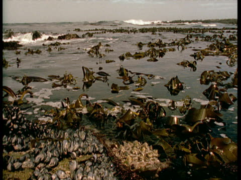 a tide surges into a pool containing kelp. - kelp stock-videos und b-roll-filmmaterial