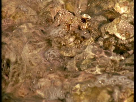 vídeos de stock, filmes e b-roll de a tide swells over a limpet shell in a tidal pool. - gastrópode