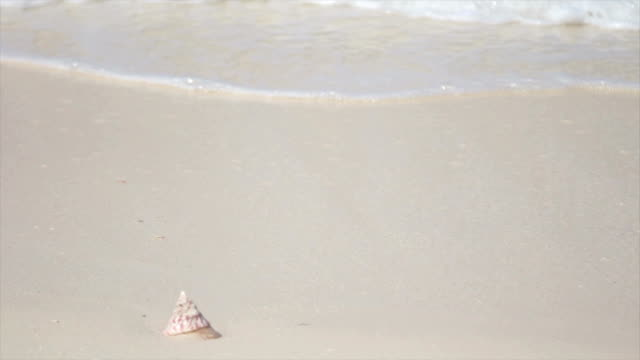 tide washing over a seashell on the sane - seashell stock videos & royalty-free footage