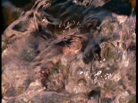 tide waters wash over limpets. - tidal pool stock videos and b-roll footage