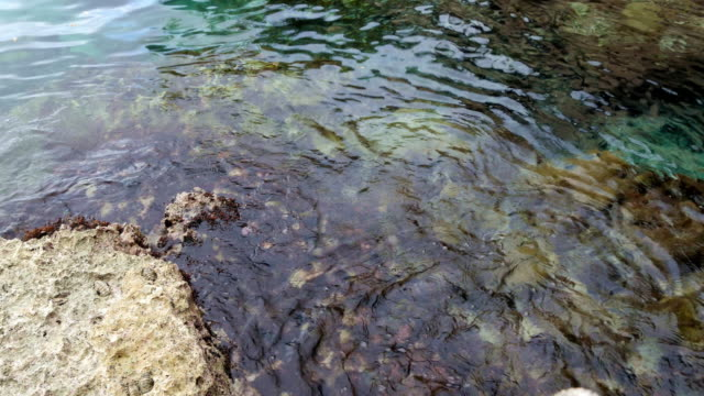 tidepool with clear water ripples - tide pool stock videos and b-roll footage