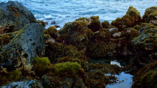 tidepools and seaweed kauai hawaii - gezeitentümpel stock-videos und b-roll-filmmaterial
