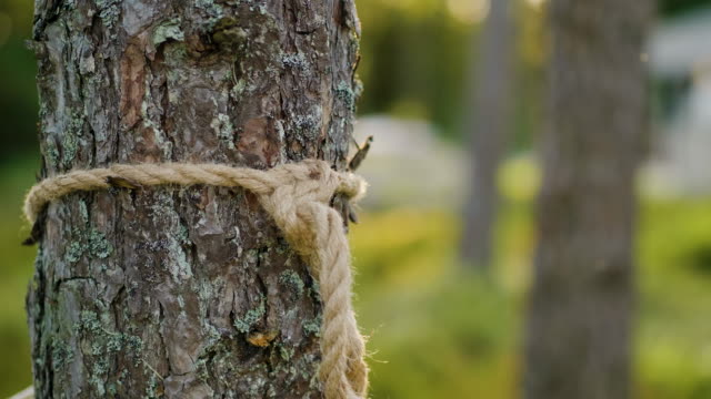 tied knot around a tree holding up a hammock - tree trunk stock videos & royalty-free footage