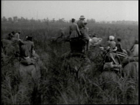 stockvideo's en b-roll-footage met tiger hunt large caravan of men riding elephants ford river and scan field for tigers, elephant pushes over tree, bushes moving, gir forest, india - 1946