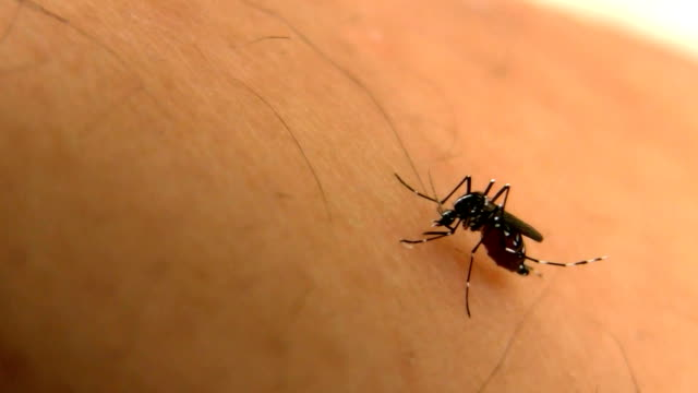 tiger-mosquito - epidemie stock-videos und b-roll-filmmaterial