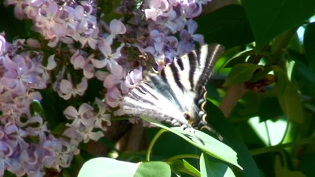 tiger swallowtail butterfly - animal antenna stock videos & royalty-free footage