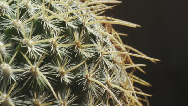 tight rows of areole on barrel cactus - barrel cactus stock videos and b-roll footage