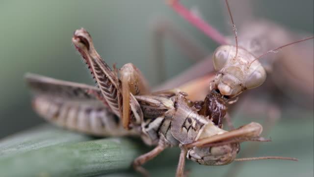 Tight shot of a praying mantis crawling out of frame.