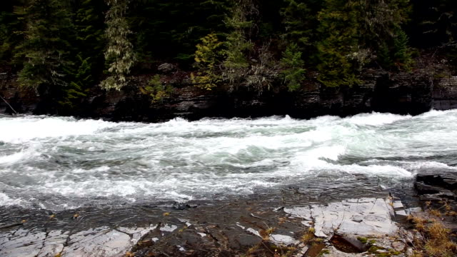 tight shot of beautiful green water rapids in river through lichen covered rocks. and evergreen forest. - mcdonald creek stock-videos und b-roll-filmmaterial