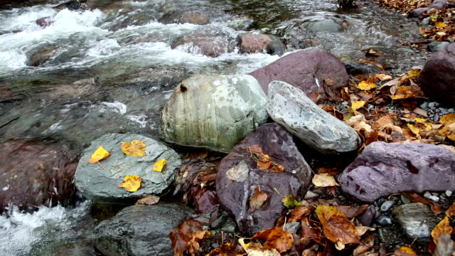 tight shot of golden leaves on rocks in water in river. - mcdonald creek stock-videos und b-roll-filmmaterial