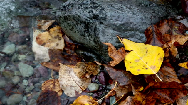 tight shot of golden leaves swirling in water and leaves on rocks in river. - mcdonald creek stock-videos und b-roll-filmmaterial