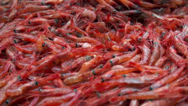 vídeos de stock e filmes b-roll de tight shot of shrimp shoveled in a fishing boat - camarão