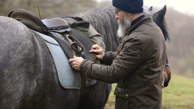 tightening the saddle - bridle stock videos & royalty-free footage