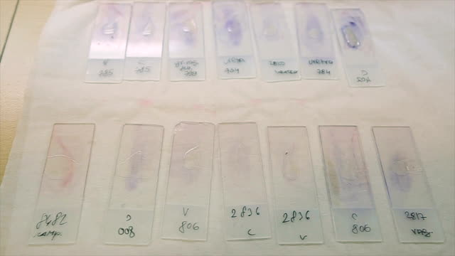 tiles with samples in a microbiological laboratory - forensic science stock videos & royalty-free footage
