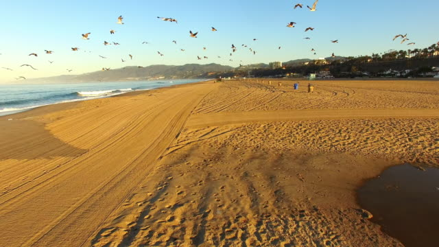 aerial tilling the santa monica beach - santa monica stock videos and b-roll footage