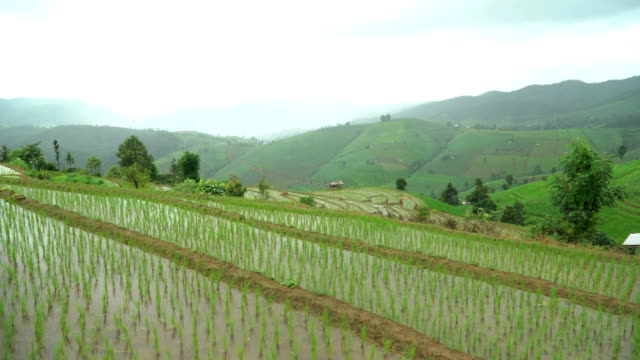Tilt: cloud reflect on fresh water in delighted rice terrace