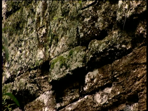 tilt down ancient remains of naactun one of lost cities of maya guatemala - latin american civilizations stock videos and b-roll footage