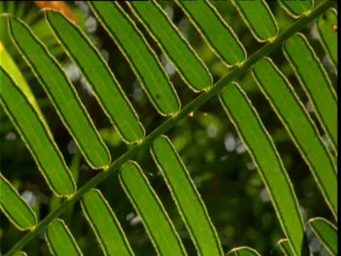 tilt down and left over palm frond in rainforest, daintree, australia - frond stock videos & royalty-free footage