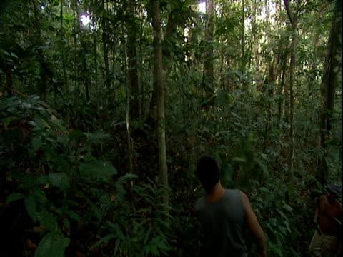 vídeos de stock, filmes e b-roll de tilt down as man chops through dense foliage with machete amazon rainforest venezuela - grosso