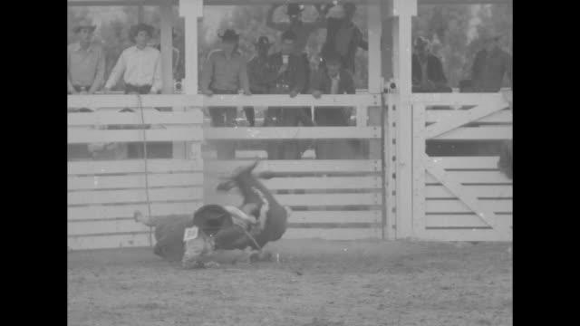 tilt down ms bull bucking man off with rodeo clown trying to distract bull with white sheet / vs men getting bucked off bulls right out of gate /... - bocksprång bildbanksvideor och videomaterial från bakom kulisserna