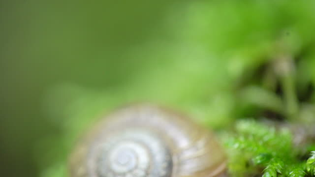 tilt down, close up of snail in nature - mollusk stock videos & royalty-free footage