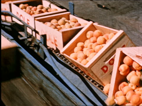 stockvideo's en b-roll-footage met 1950 tilt down crates of dole peaches on conveyor belt turning over + dumping fruit into chute / industrial - vol fysieke beschrijving