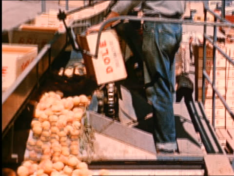 1950 tilt down dole peaches moving on conveyor belt / industrial - crate stock videos & royalty-free footage
