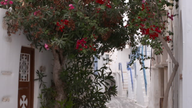 tilt down: flower trees in a quaint cobblestone street with cycladic houses - 白しっくい塗点の映像素材/bロール