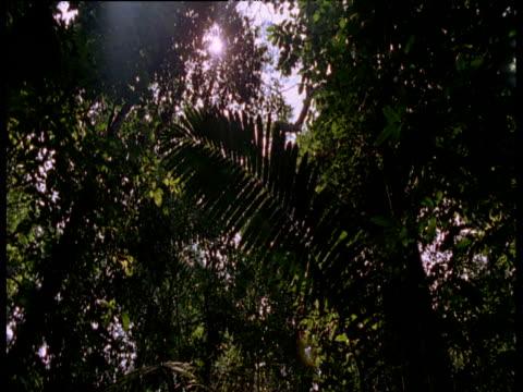 vídeos de stock e filmes b-roll de tilt down from amazon rain forest canopy to dark undergrowth - orvalho