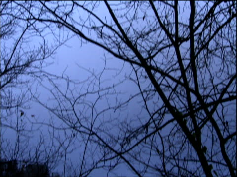 stockvideo's en b-roll-footage met tilt down from bare trees to matlock through branches derbyshire - derbyshire