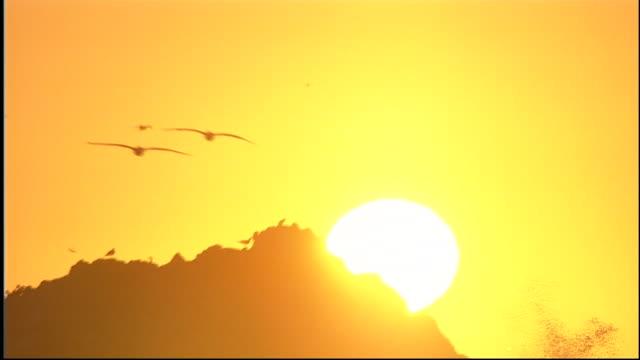 vídeos de stock e filmes b-roll de tilt down from birds flying to silhouetted rocky shore line at sunset - grupo médio de animais