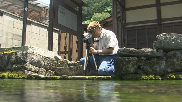 Tilt down from crouching cameraman to Baikamo flowers (Ranunculus nipponicus) on river bed, Jizo River, Maibara, Shiga