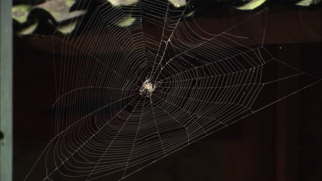 tilt down from large spider in web to girl doing embroidery on balcony of house. - spider web stock videos & royalty-free footage