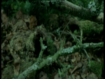 tilt down from lichen to fallen apples, europe - 葉状体点の映像素材/bロール