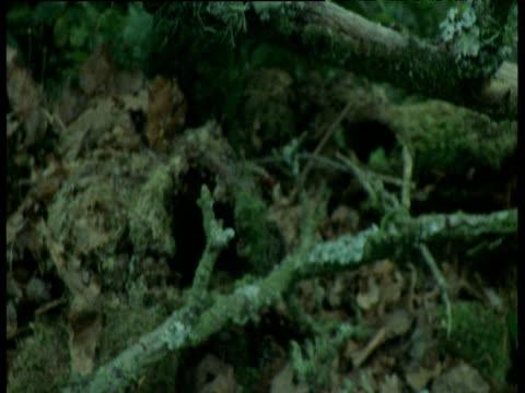 tilt down from lichen to fallen apples, europe - 地衣類点の映像素材/bロール