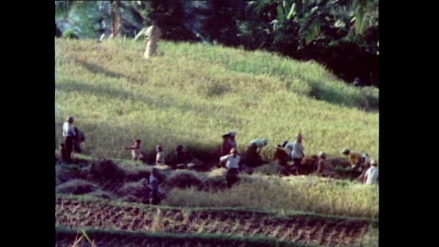 vidéos et rushes de tilt down from mountains to bali rice paddy; 1985 - chapeau de paille