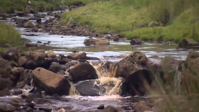 tilt down from northumberland rural scene to stream running over rocks - idyllic stock videos & royalty-free footage