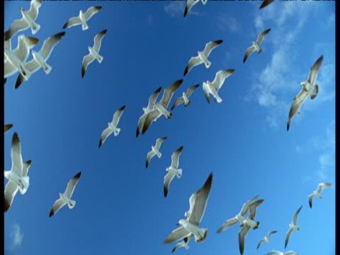 tilt down from overhead flock of gulls to lifeguard hut, miami beach - cabina del guardaspiaggia video stock e b–roll