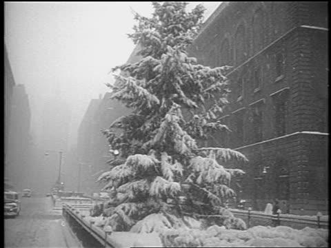 B/W 1948 tilt down from snowy tree to light traffic on snowy Park Avenue in snowstorm / NYC / newsreel