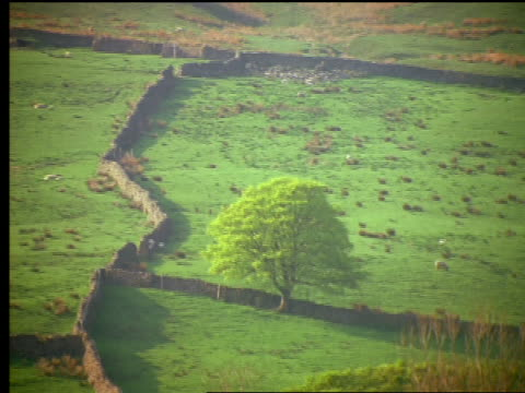 tilt down low stone walls stretching across grassy hill landscape / yorkshire dales / england - patchwork landscape stock videos and b-roll footage