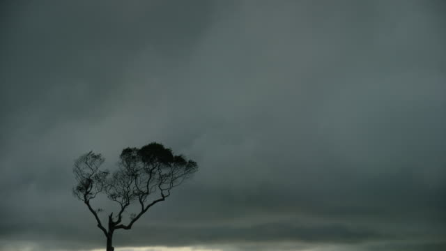 tilt down of heavy clouds over the ocean - single tree stock videos & royalty-free footage